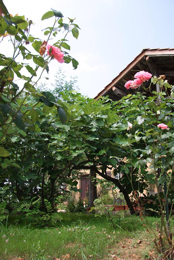 Le jardin aux roses la maison dans le gers for Le jardin aux 100 secrets